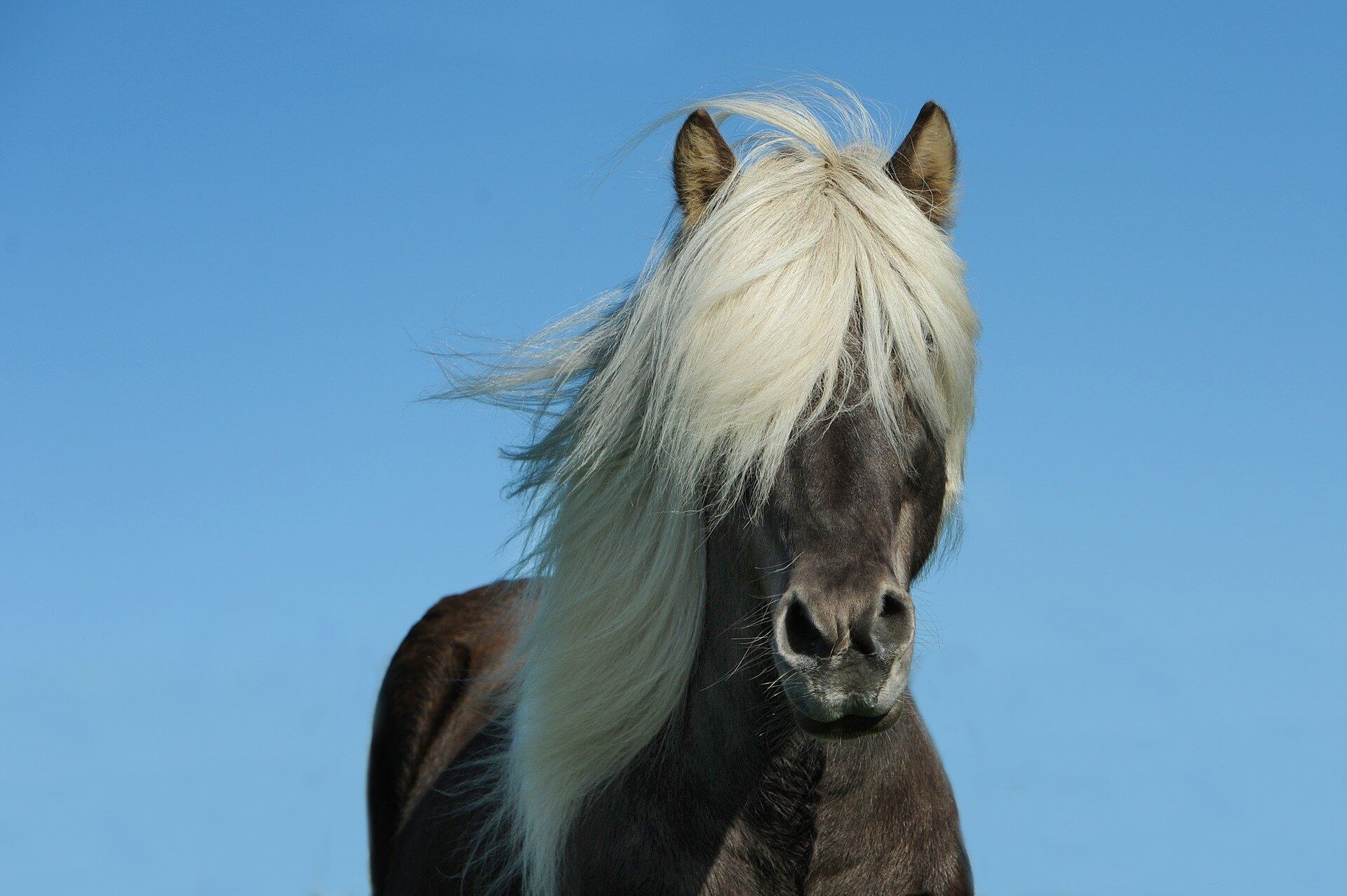 pferdesalbe header