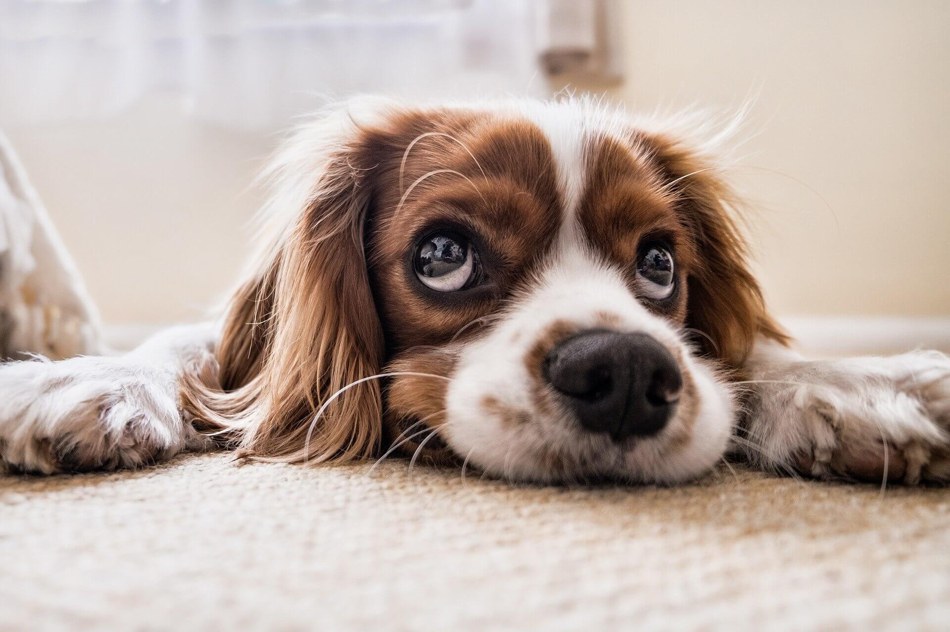 hundehaare entfernen header